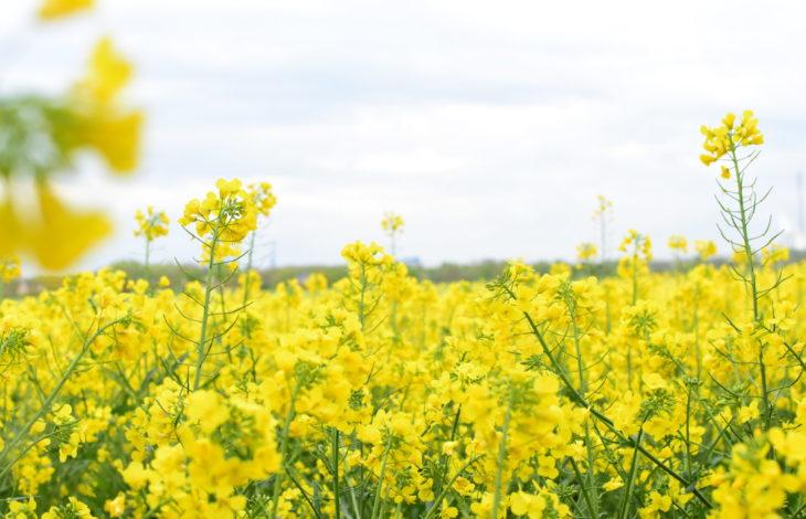 Land NRW – Landwirtschaftskammer: Bienen, Raps & Schafe