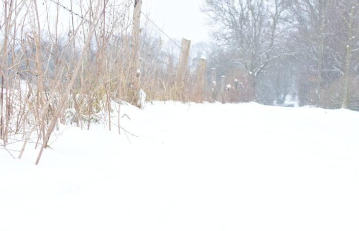 Stadt Rheinberg – Der Winter- und Kälteeinbruch macht Änderungen notwendig