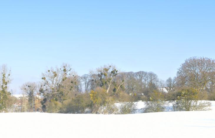 Rheinberg-Orsoy – Fotostrecke: Winterimpressionen