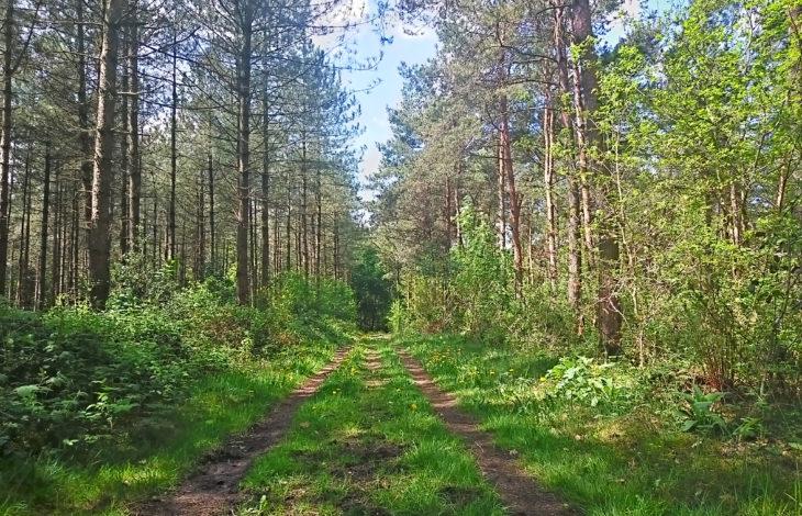 Kreis Wesel – Erfolgreicher Klimaschutz funktioniert nur mit einem gesunden Wald