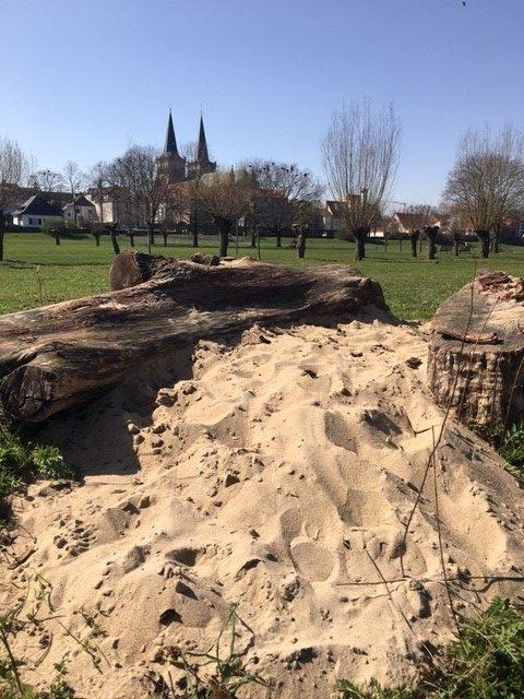 Stadt Xanten – Blütenwiese im Kurpark Ostwall