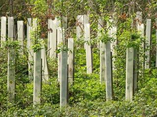 Alpen – FDP Alpen : In Alpen nur noch geschützte Bäume
