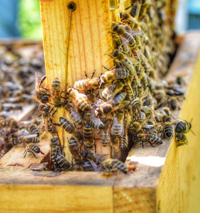 Land NRW – Landwirtschaftskammer NRW: Äcker, Balkonpflanzen, Bienen und Alpakas