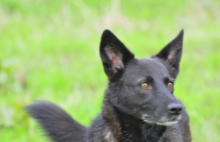 Gemeinde Sonsbeck – Hundebestandsaufnahme in der Gemeinde Sonsbeck