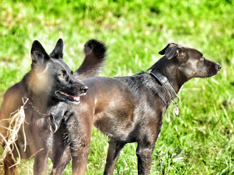 Hunde - Foto Sassan Dastkutah
