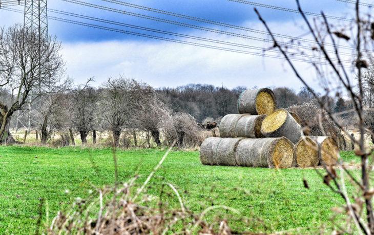 Landwirtschaftskammer NRW – Ferienbauernhöfe wieder eröffnet